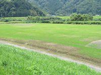 函南町肥田簡易グラウンド1