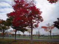 新篠津村運動公園サッカー場2