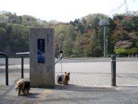 永山公園総合運動場陸上競技場2