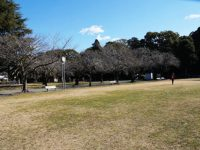 稲荷公園1