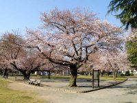 稲荷公園3