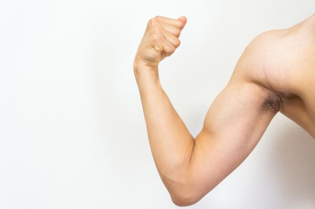男性の筋肉